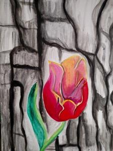 Houston Tulip